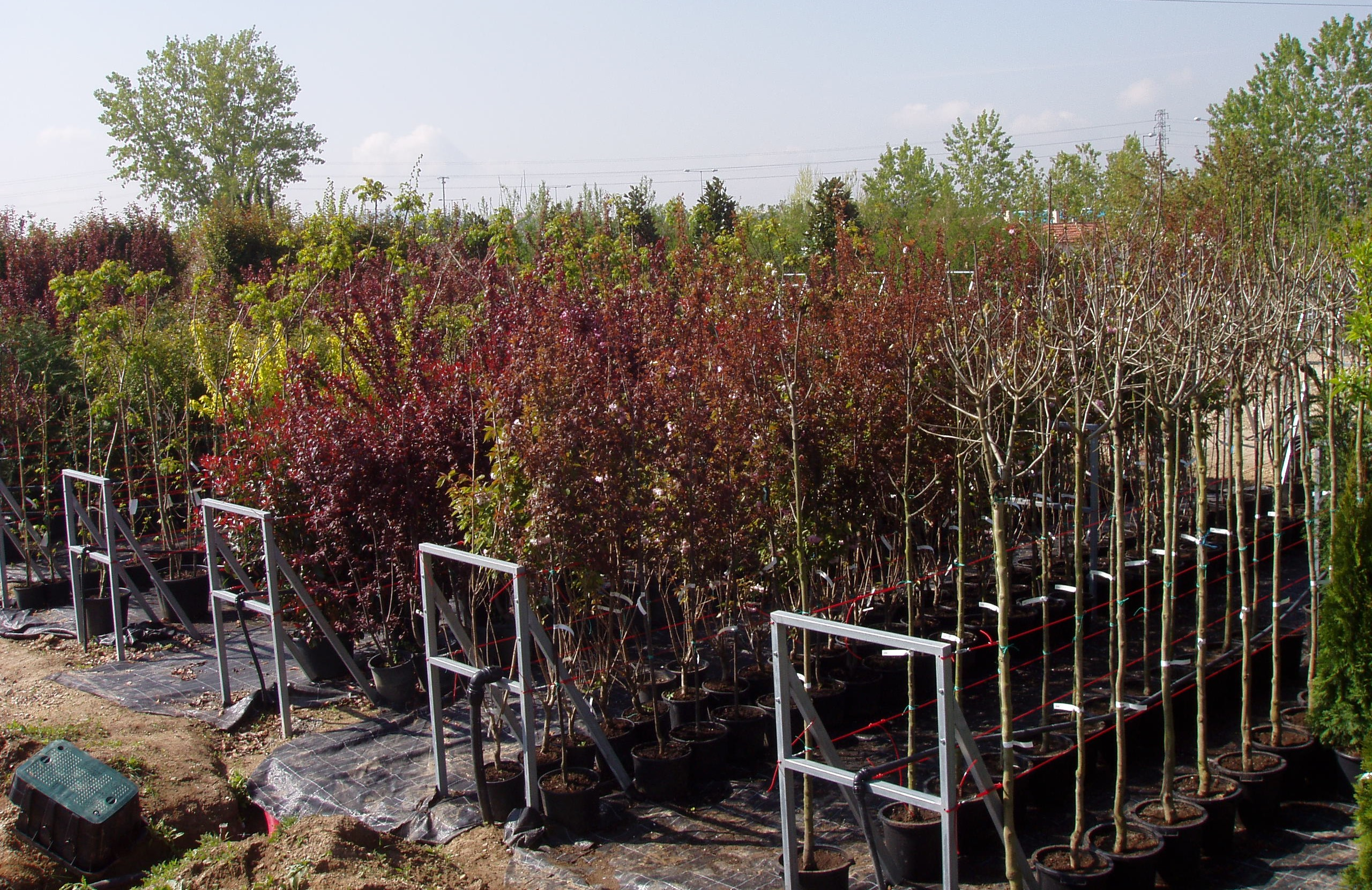 Centro de jardiner a viveros gimeno for Jardineria rosales