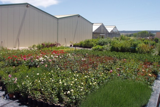 Centro de jardiner a viveros gimeno - Viveros gimeno salamanca ...